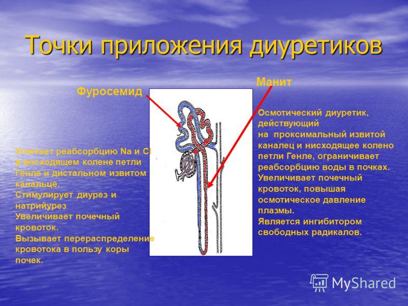 Точки приложения диуретиков Фуросемид Манит Угнетает реабсорбцию Na и Cl в восходящем колене петли Генле и дистальном извитом канальце. Стимулирует диурез и натрийурез Увеличивает почечный кровоток. Вызывает перераспределение кровотока в пользу коры