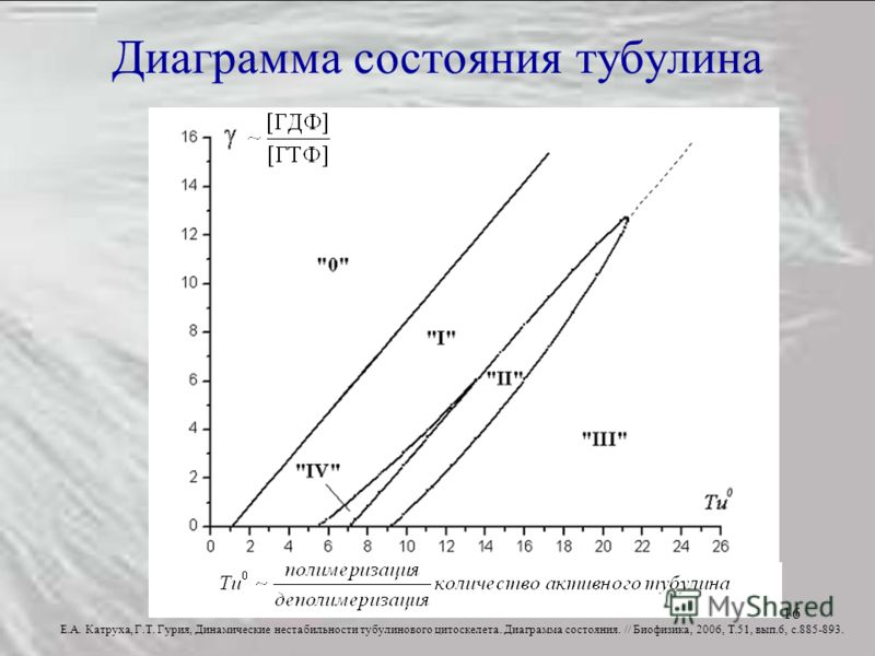 16 Диаграмма состояния тубулина Е.А. Катруха, Г.Т. Гурия, Динамические нестабильности тубулинового цитоскелета. Диаграмма состояния. // Биофизика, 2006, Т.51, вып.6, с.885-893.