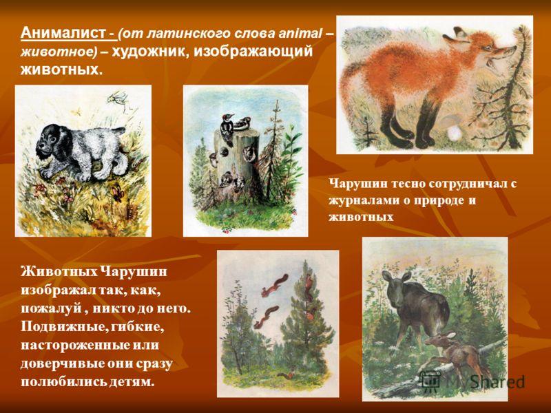 Анималист - (от латинского слова animal – животное) – художник, изображающий животных. Животных Чарушин изображал так, как, пожалуй, никто до него. Подвижные, гибкие, настороженные или доверчивые они сразу полюбились детям. Чарушин тесно сотрудничал