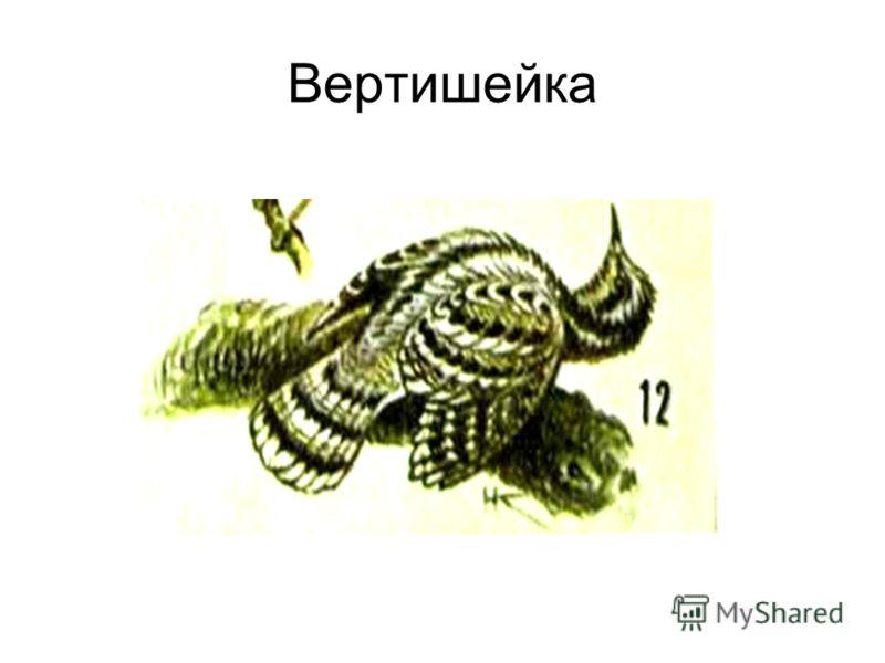 Вертишейка