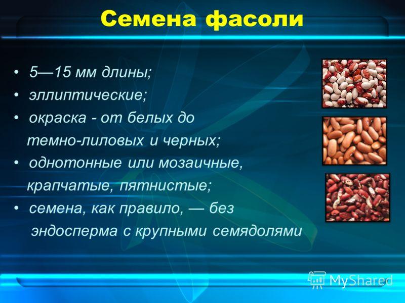Семена фасоли 515 мм длины; эллиптические; окраска - от белых до темно-лиловых и черных; однотонные или мозаичные, крапчатые, пятнистые; семена, как правило, без эндосперма с крупными семядолями