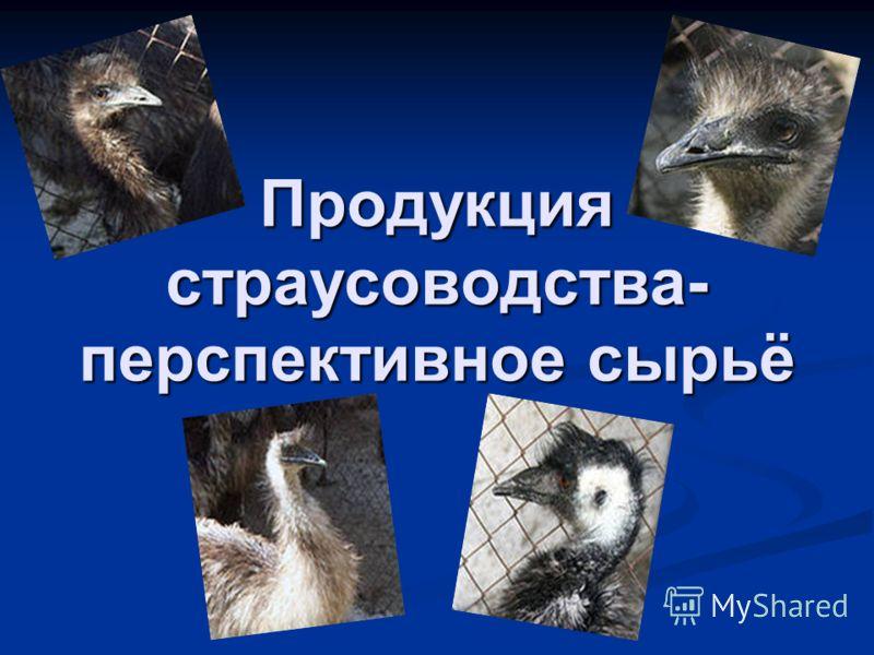 Продукция страусоводства- перспективное сырьё