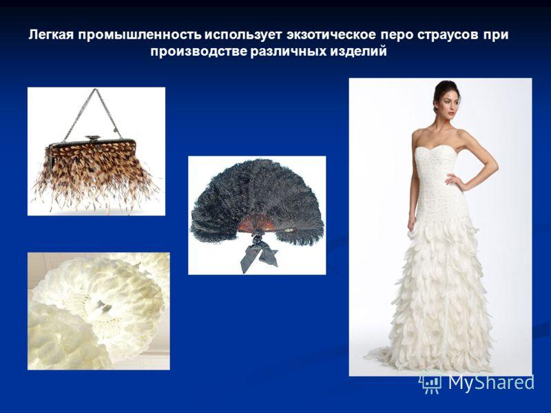 Легкая промышленность использует экзотическое перо страусов при производстве различных изделий