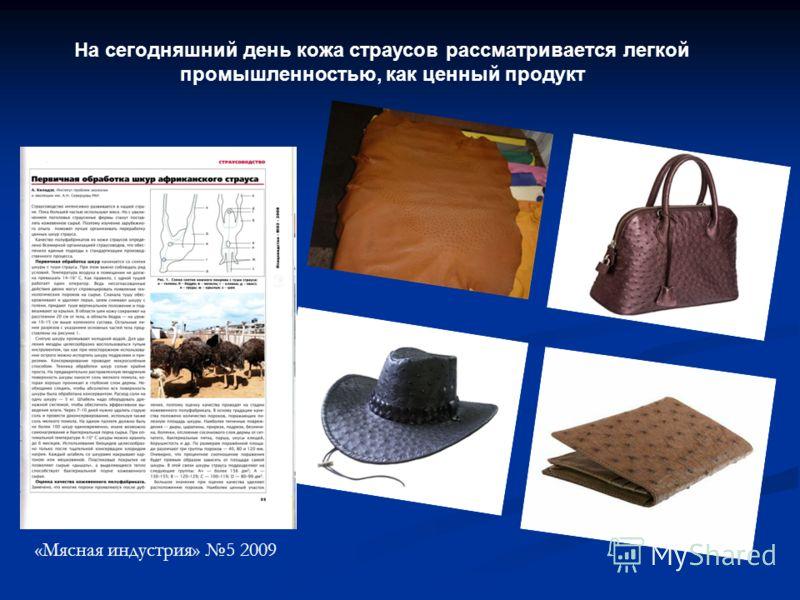 На сегодняшний день кожа страусов рассматривается легкой промышленностью, как ценный продукт «Мясная индустрия» 5 2009