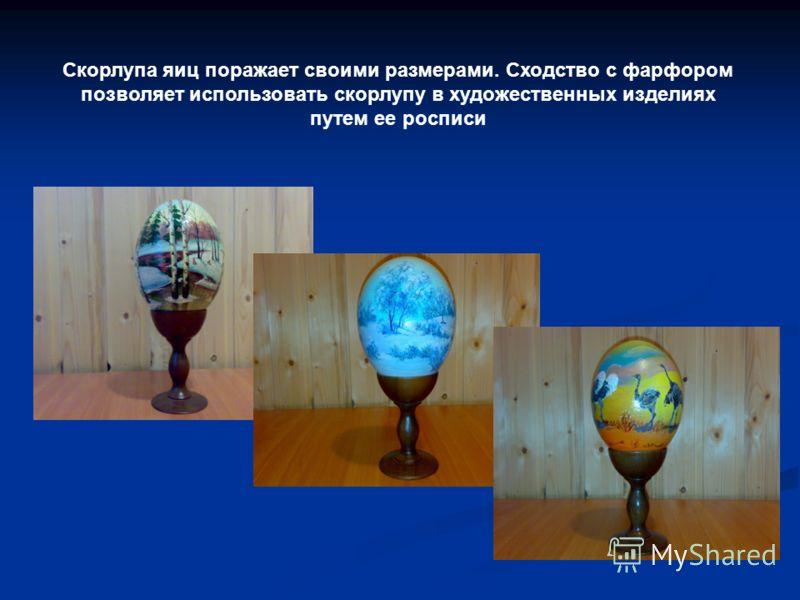 Скорлупа яиц поражает своими размерами. Сходство с фарфором позволяет использовать скорлупу в художественных изделиях путем ее росписи