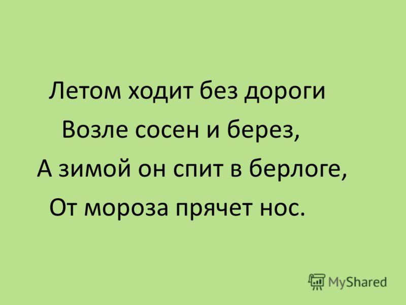 Летом ходит без дороги Возле сосен и берез, А зимой он спит в берлоге, От мороза прячет нос.