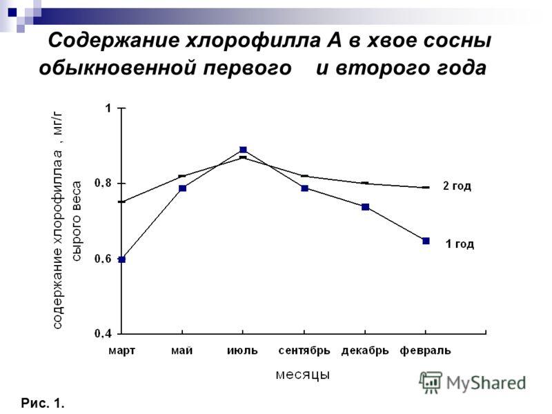 Содержание хлорофилла А в хвое сосны обыкновенной первого и второго года Рис. 1.