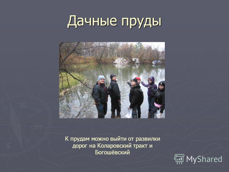 Дачные пруды К прудам можно выйти от развилки дорог на Коларовский тракт и Богошёвский