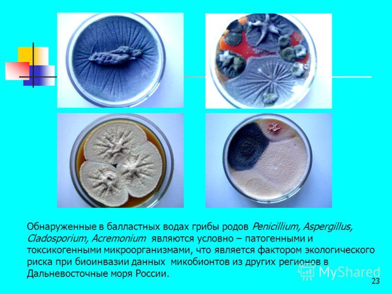 23 Обнаруженные в балластных водах грибы родов Penicillium, Aspergillus, Cladosporium, Acremonium являются условно – патогенными и токсикогенными микроорганизмами, что является фактором экологического риска при биоинвазии данных микобионтов из других