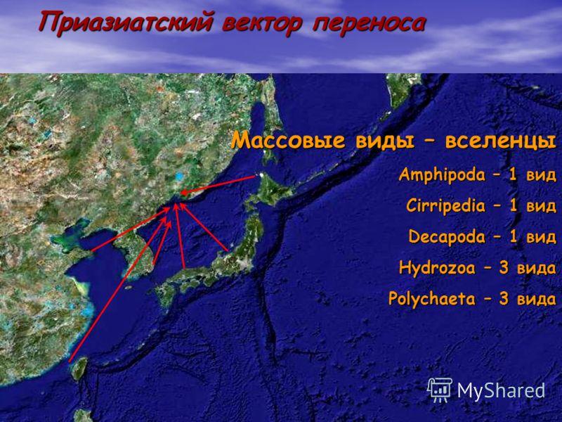 7 Приазиатский вектор переноса Массовые виды – вселенцы Amphipoda – 1 вид Cirripedia – 1 вид Decapoda – 1 вид Hydrozoa – 3 вида Polychaeta – 3 вида
