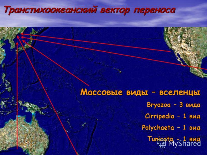 8 Транстихоокеанский вектор переноса Массовые виды – вселенцы Bryozoa – 3 вида Cirripedia – 1 вид Polychaeta – 1 вид Tunicata - 1 вид