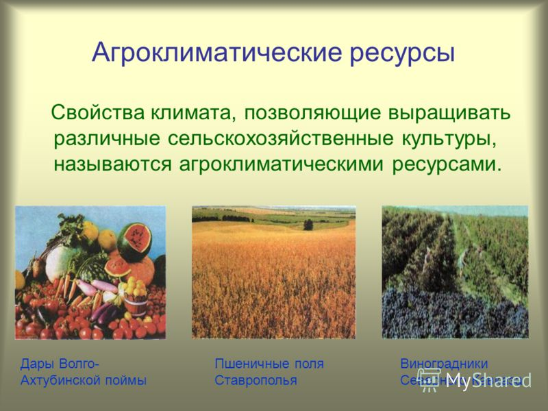 Агроклиматические ресурсы Свойства климата, позволяющие выращивать различные сельскохозяйственные культуры, называются агроклиматическими ресурсами. Дары Волго- Ахтубинской поймы Пшеничные поля Ставрополья Виноградники Северного Кавказа