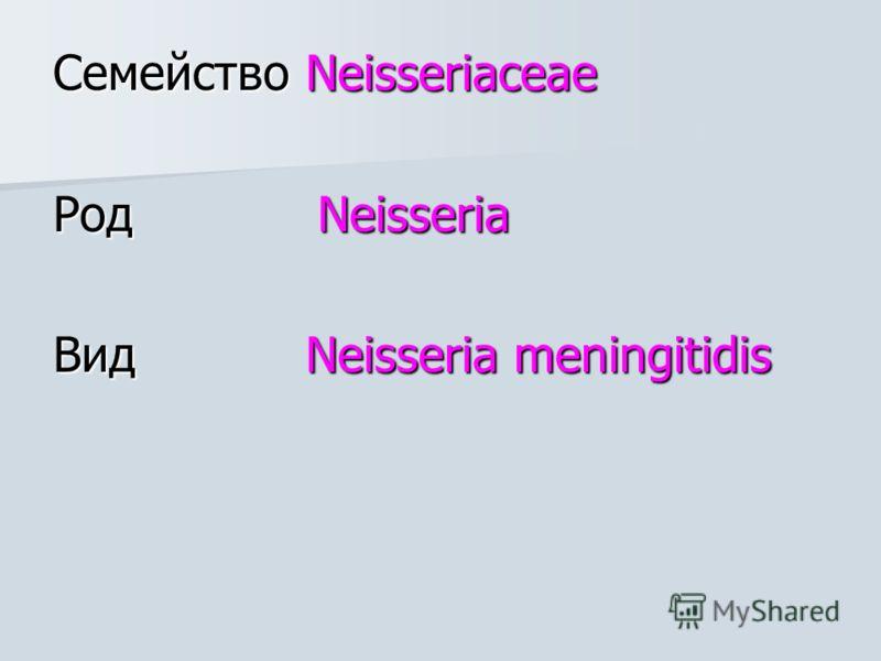 Семейство Neisseriaceae Род Neisseria Вид Neisseria meningitidis