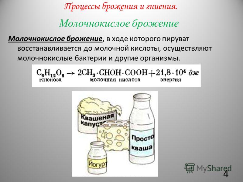 Молочнокислое брожение Молочнокислое брожение, в ходе которого пируват восстанавливается до молочной кислоты, осуществляют молочнокислые бактерии и другие организмы. Процессы брожения и гниения. 4