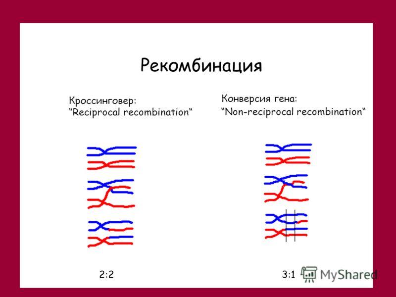 Конверсия гена: Non-reciprocal recombination Рекомбинация Кроссинговер: Reciprocal recombination 2:23:1