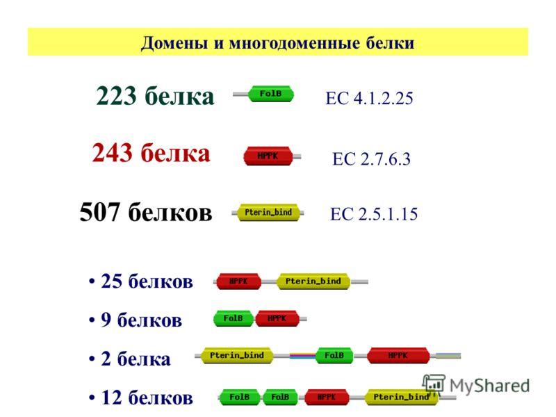 25 белков 9 белков 2 белка 12 белков 223 белка 243 белка 507 белков ЕС 2.5.1.15 ЕС 4.1.2.25 ЕС 2.7.6.3 Домены и многодоменные белки