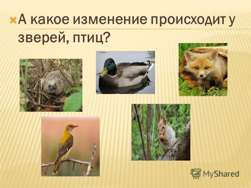 А какое изменение происходит у зверей, птиц?