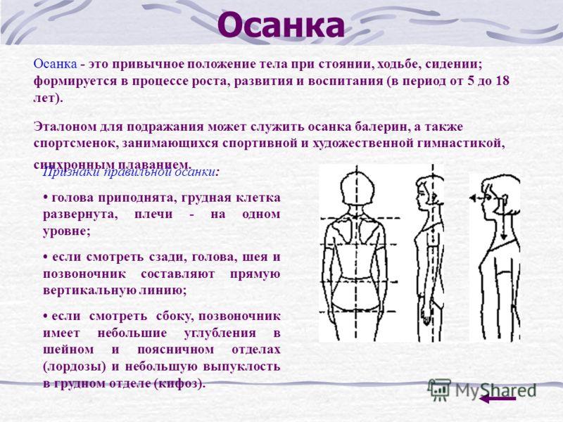 Осанка Осанка - это привычное положение тела при стоянии, ходьбе, сидении; формируется в процессе роста, развития и воспитания (в период от 5 до 18 лет). Эталоном для подражания может служить осанка балерин, а также спортсменок, занимающихся спортив