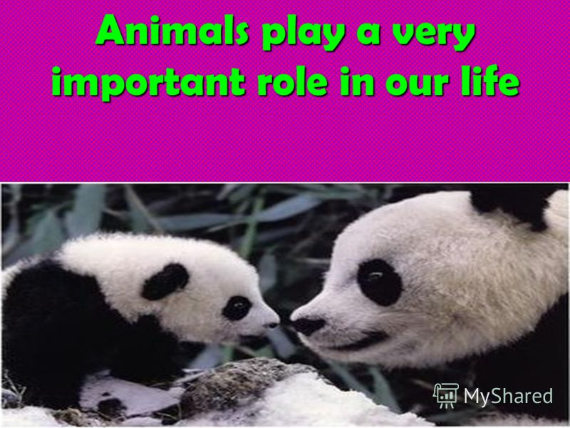 Animals play a very important role in our life слайд 6 animals in