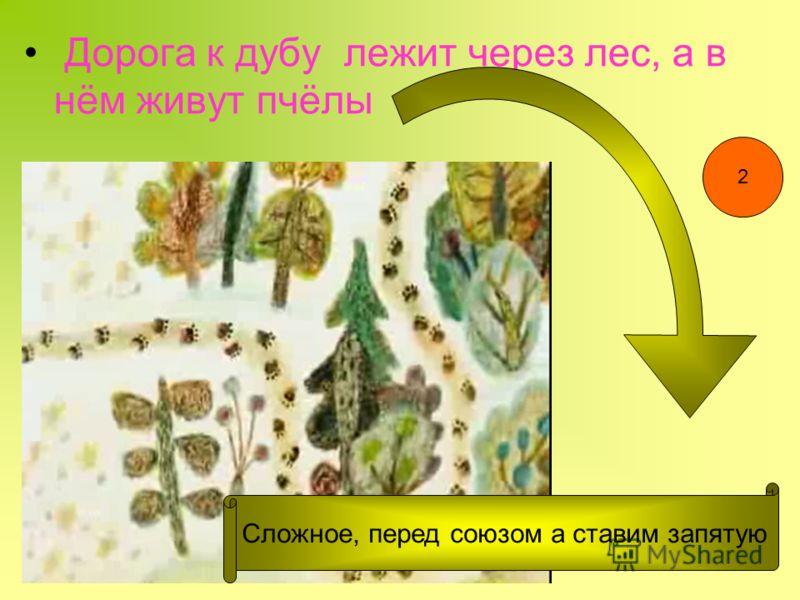 Дорога к дубу лежит через лес, а в нём живут пчёлы Сложное, перед союзом а ставим запятую 2
