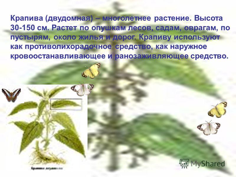 Крапива (двудомная) – многолетнее растение. Высота 30-150 см. Растет по опушкам лесов, садам, оврагам, по пустырям, около жилья и дорог. Крапиву используют как противолихорадочное средство, как наружное кровоостанавливающее и ранозаживляющее средство