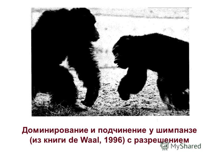 Доминирование и подчинение у шимпанзе (из книги de Waal, 1996) с разрешением