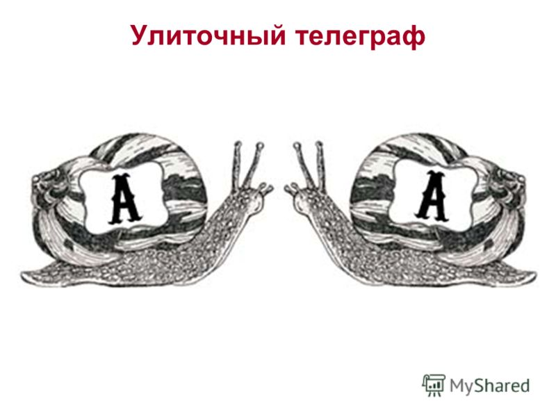 Улиточный телеграф