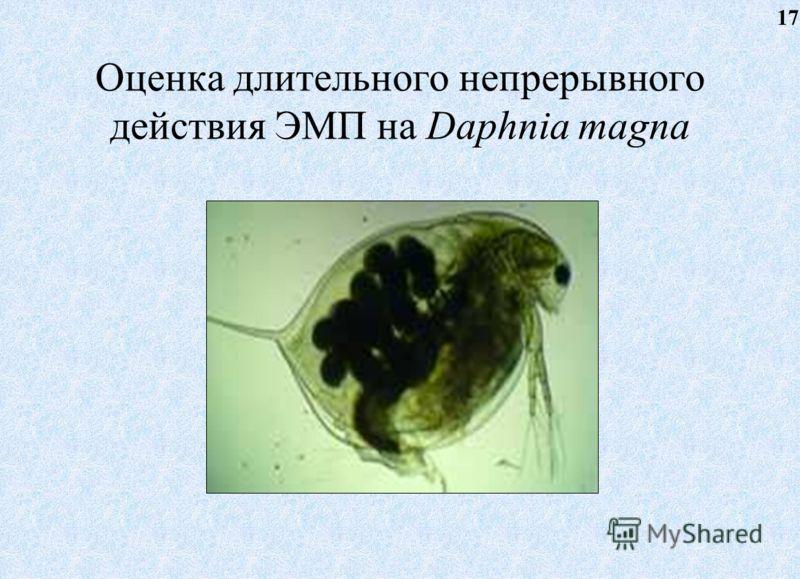 Оценка длительного непрерывного действия ЭМП на Daphnia magna 17
