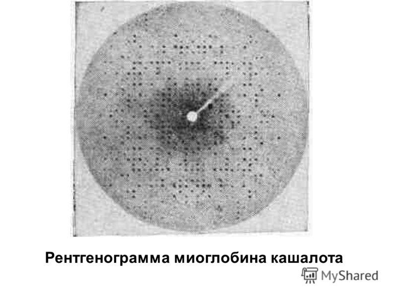 Рентгенограмма миоглобина кашалота
