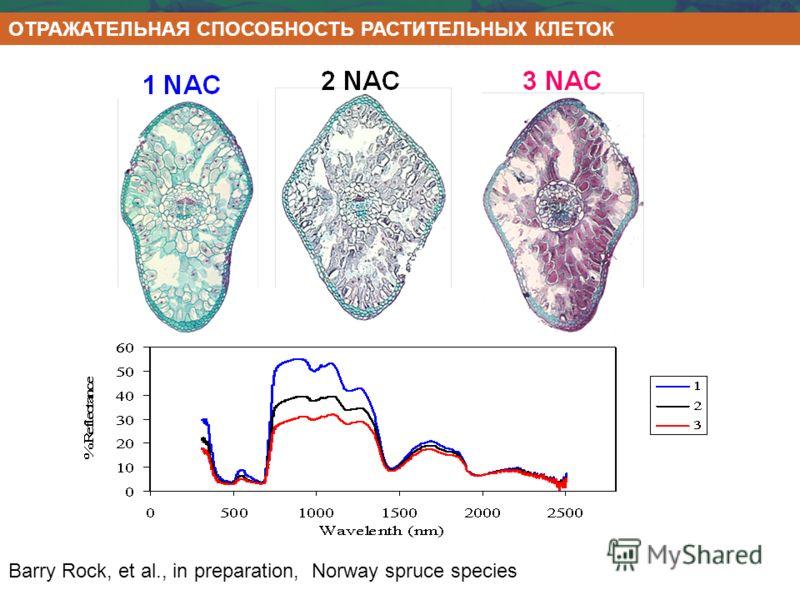 Barry Rock, et al., in preparation, Norway spruce species ОТРАЖАТЕЛЬНАЯ СПОСОБНОСТЬ РАСТИТЕЛЬНЫХ КЛЕТОК