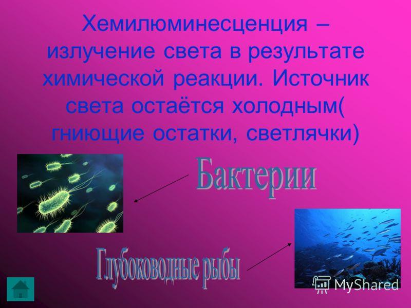 Хемилюминесценция – излучение света в результате химической реакции. Источник света остаётся холодным( гниющие остатки, светлячки)