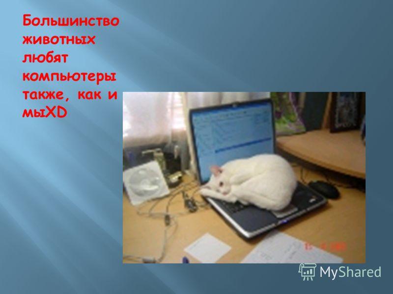 Большинство животных любят компьютеры также, как и мыXD