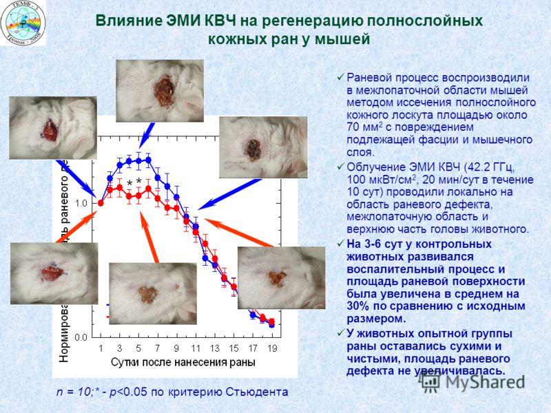 Влияние ЭМИ КВЧ на регенерацию полнослойных кожных ран у мышей Раневой процесс воспроизводили в межлопаточной области мышей методом иссечения полнослойного кожного лоскута площадью около 70 мм 2 с повреждением подлежащей фасции и мышечного слоя. Облу