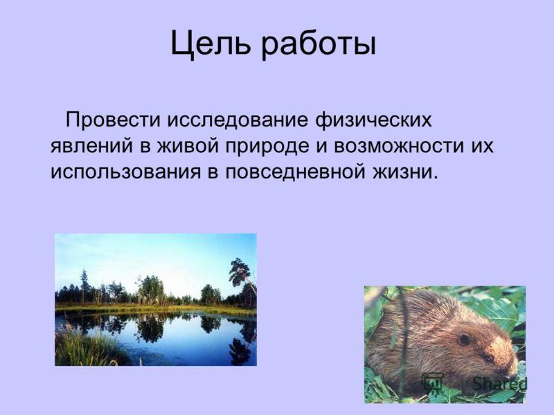 Цель работы Провести исследование физических явлений в живой природе и возможности их использования в повседневной жизни.