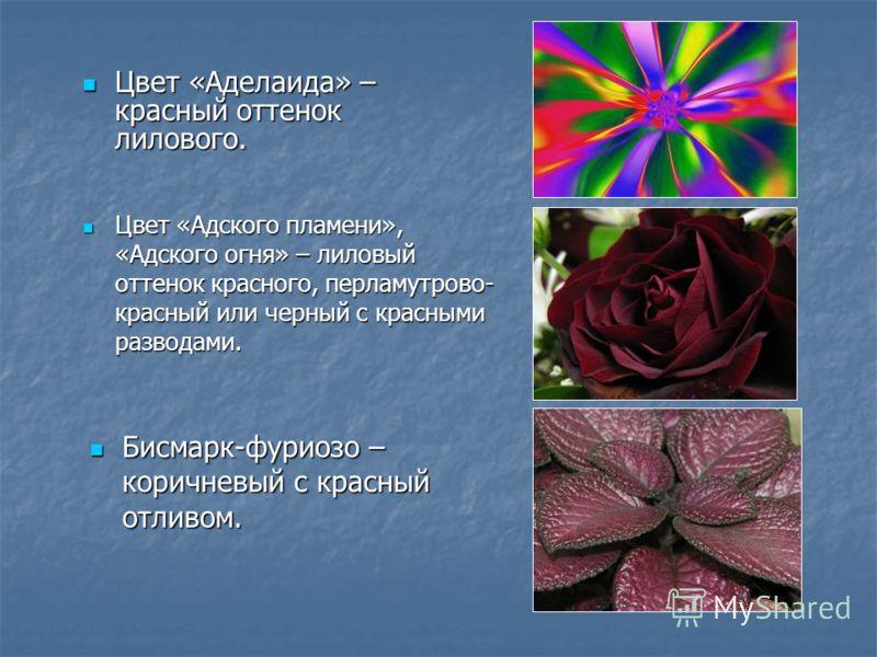 Цвет «Адского пламени», «Адского огня» – лиловый оттенок красного, перламутрово- красный или черный с красными разводами. Цвет «Адского пламени», «Адского огня» – лиловый оттенок красного, перламутрово- красный или черный с красными разводами. Цвет «