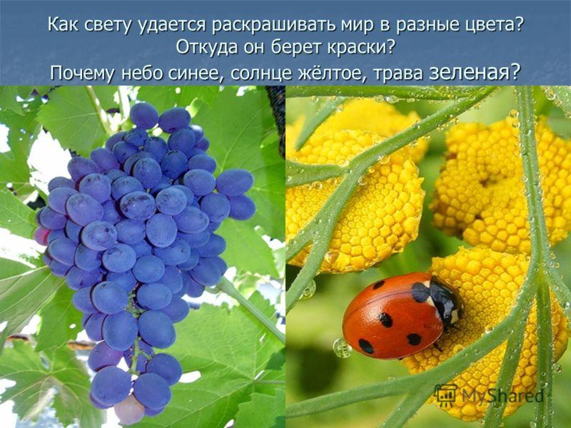 Как свету удается раскрашивать мир в разные цвета? Откуда он берет краски? Почему небо синее, солнце жёлтое, трава зеленая?