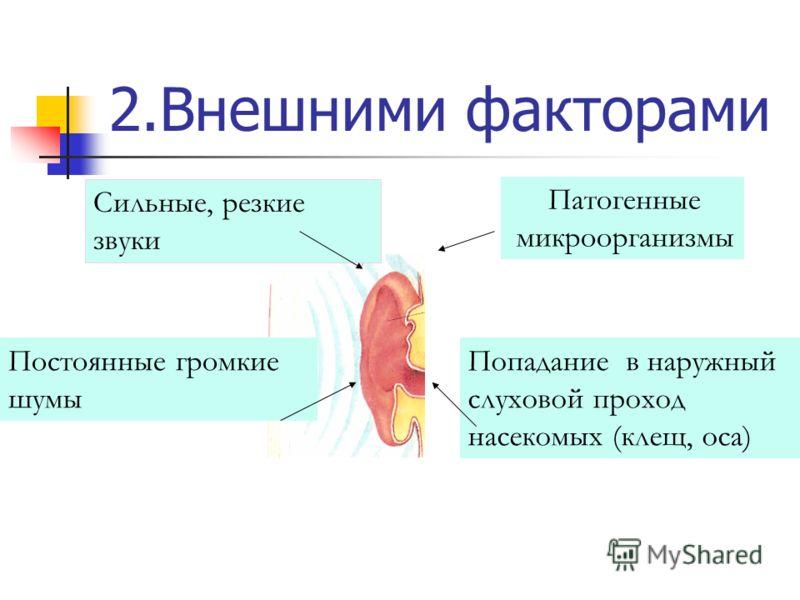 2.Внешними факторами Сильные, резкие звуки Постоянные громкие шумы Патогенные микроорганизмы Попадание в наружный слуховой проход насекомых (клещ, оса)