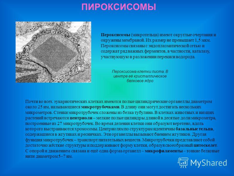 ПИРОКСИСОМЫ Пероксисома клетки листа. В центре её кристаллическое белковое ядро Пероксисомы (микротельца) имеют округлые очертания и окружены мембраной. Их размер не превышает 1,5 мкм. Пероксисомы связаны с эндоплазматической сетью и содержат ряд важ