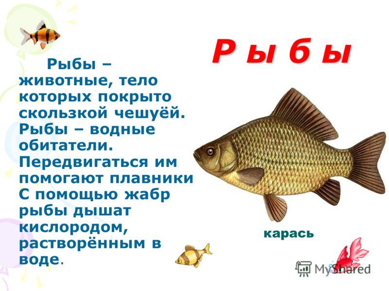 Р ы б ы Р ы б ы Рыбы – животные, тело которых покрыто скользкой чешуёй. Рыбы – водные обитатели. Передвигаться им помогают плавники. С помощью жабр рыбы дышат кислородом, растворённым в воде. карась