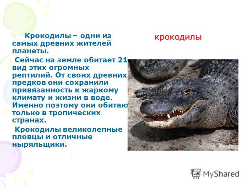 крокодилы крокодилы Крокодилы – одни из самых древних жителей планеты. Сейчас на земле обитает 21 вид этих огромных рептилий. От своих древних предков они сохранили привязанность к жаркому климату и жизни в воде. Именно поэтому они обитают только в т