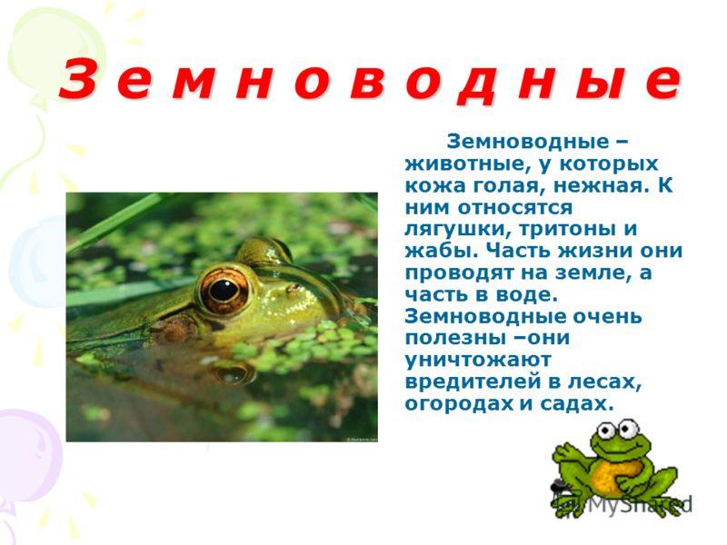 З е м н о в о д н ы е З е м н о в о д н ы е Земноводные – животные, у которых кожа голая, нежная. К ним относятся лягушки, тритоны и жабы. Часть жизни они проводят на земле, а часть в воде. Земноводные очень полезны –они уничтожают вредителей в лесах