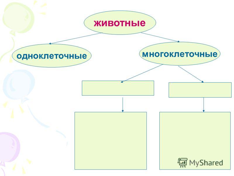 животные одноклеточные многоклеточные