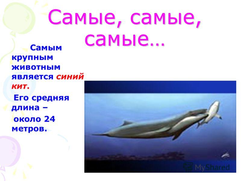 Самые, самые, самые… Самым крупным животным является синий кит. Его средняя длина – около 24 метров.