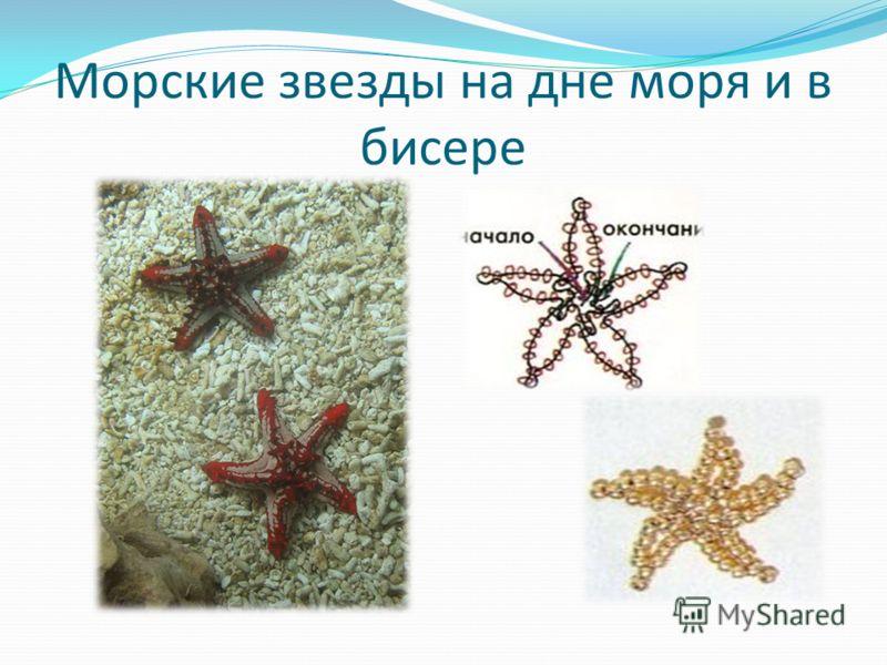 Морские звезды на дне моря и в бисере