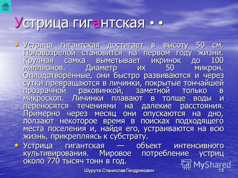 Шурута Станислав Гендрикович12 Устрица гигантская Устрица гигантская С древнейших времен устрицы являются самыми известными и популярными из съедобных двустворчатых моллюсков. На Дальнем Востоке России обитает устрица гигантская. Ее ареал на севере о
