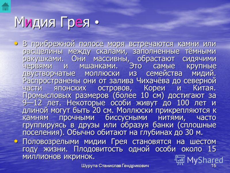 Шурута Станислав Гендрикович14 Мидия Грея GRENOMYTILUS GRAYANUS Рис