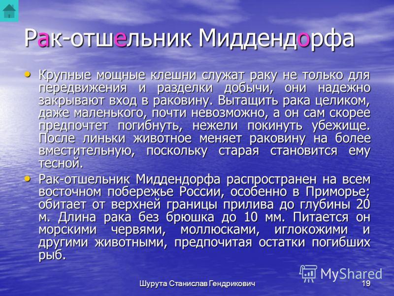 Шурута Станислав Гендрикович18 Рак-отшельник Миддендорфа Рак-отшельник Миддендорфа Семейство раков-отшельников насчитывает большое число видов, распространенных во многих морях. Их легко узнать по пустой раковине брюхоногих моллюсков, скрывающей в се