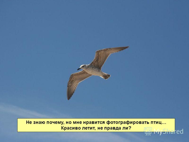 Не знаю почему, но мне нравится фотографировать птиц… Красиво летит, не правда ли?