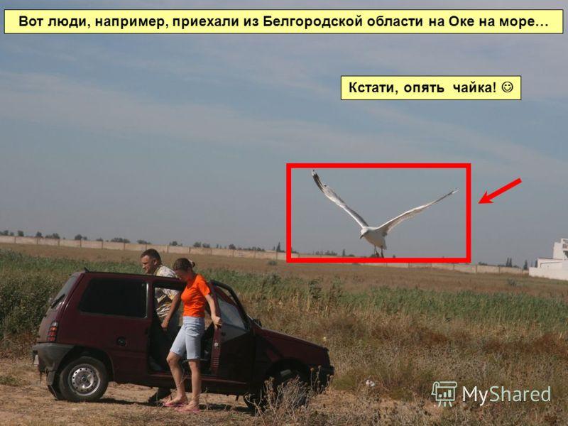 Вот люди, например, приехали из Белгородской области на Оке на море… Кстати, опять чайка!