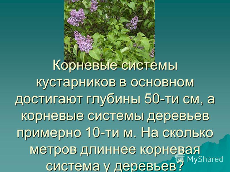 Корневые системы кустарников в основном достигают глубины 50-ти см, а корневые системы деревьев примерно 10-ти м. На сколько метров длиннее корневая система у деревьев?